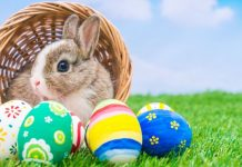 Funny Easter Quotes Jokes